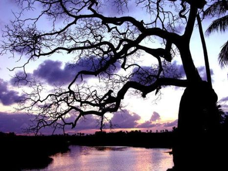 Tree at the banks of the river by Clauclic
