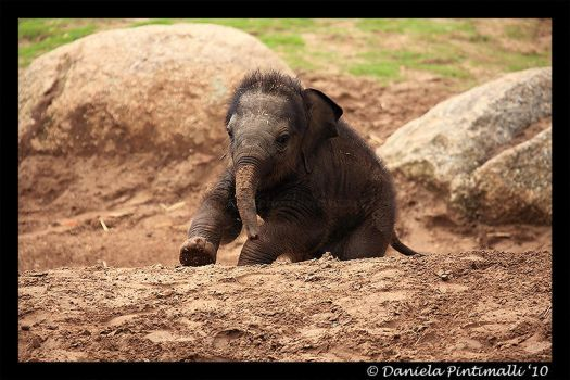 Running Baby Elephant by TVD-Photography