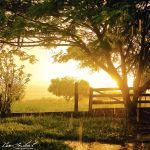 The Afternoon Rain II by IsacGoulart
