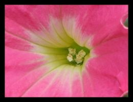 In The Pink by picworth1000wrds