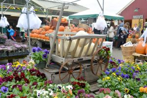 October 2014, Local Farm Stand Autumn Display by Miss-Tbones