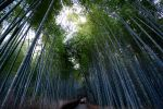Bamboo Road by Jkins