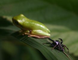 Spider and Treefrog 20D0035511 by Cristian-M
