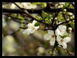 Spring Time by Lamia86