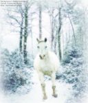 Snow Horse by Stock-Please