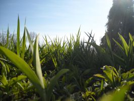 Grass by emr373stocks