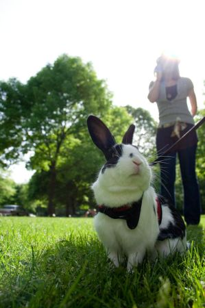 Rabbit On A Leash