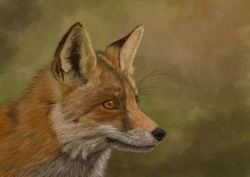 The Fox, en profil by Sarahharas07