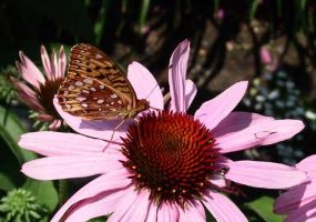 Butterfly at Work by Saninn