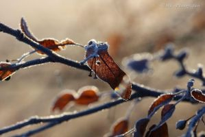 Sunrise on a beautiful frosty winter day 10 by MT-Photografien