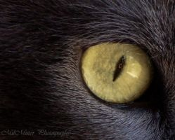 Pure Evil by MilMister