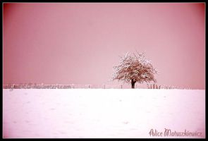Cotton Candy World by allym007
