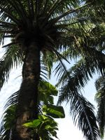 Palm tree by crazygirlclub