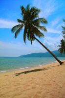 Palm tree Tioman by Muryk124