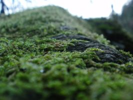 Mossy Mountain by DeadHeadStock