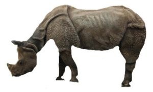 RHINO THAT WORKED OUT by skippymyboy