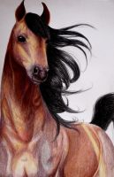 Horse- coloured pencils by Martyna-Van-Dracula