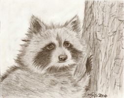 Raccoon by hesxmyxEDO
