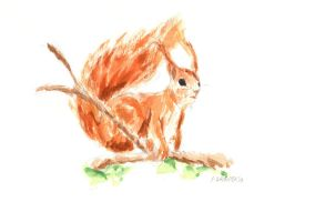 Red Squirrel by Slahoot