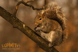 Itza squirrel by Lupinicious
