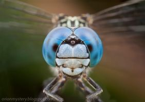 Blue Eyes (IMG 3591 stk copy) by orionmystery
