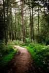The Wooded Walk by AndyPK