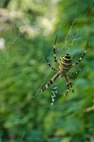 Spider. by jennystokes