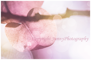 Pink leave by JunnyPhotography
