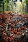 Depths of the Forest by FlorentCourty