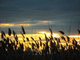Meadowlands Sunset by artiseverywhere410