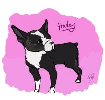 Harley the Boston Terrier by HolyCirce