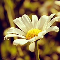 Smile Daisy by liliumdk