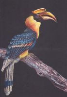Great Hornbill by phantastes