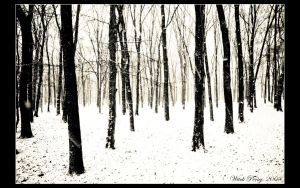 Endless Winter Forest by pociej