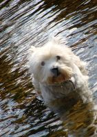 dog in the Stort 4 by Rhoehypnol