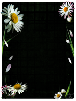Journal Skin Daisies by Ina-C