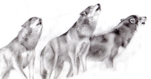 howling wolfs by Araless