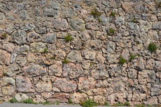 Texture : wall with small plants by A1Z2E3R