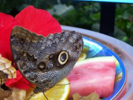 Butterfly Lunch by Tusserte