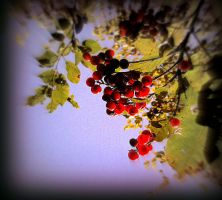 Autumn Berries by surrealistic-gloom