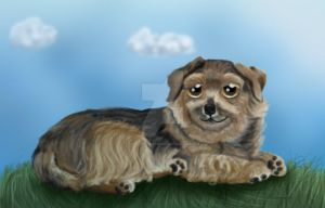 Norfolk Terrier by SketchingGalaxies