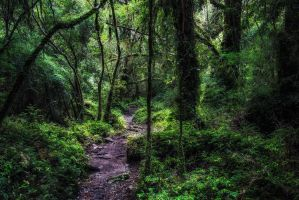Alerce Andino rainforest by jViks
