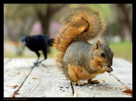 I Want Your Nuts by dEivIDmx