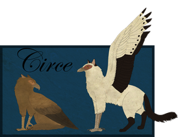 Circe Reference by twist-of-fate-16