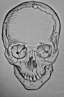 Adult Skull, Anterior View by senf-a
