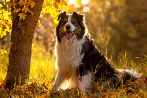 Wallace by BlackPepperPhotos