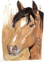 Horse 24 by Paintwick