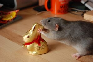 Lindt Easter Bunny by hoshitsu