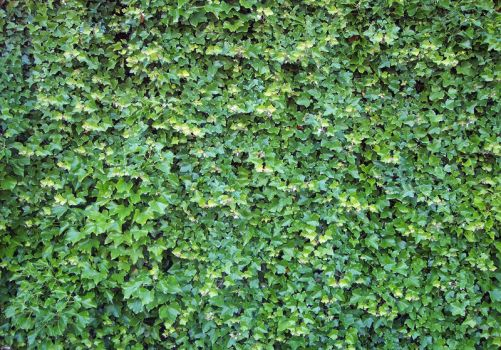 Stock: Ivy by Stock-By-Michelle