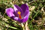 Spring personafied by natureguy